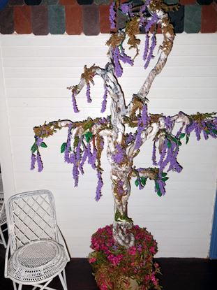 Picture of Dollhouse wisteria plant  (Large)