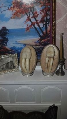 Picture of Walrus Tusks Miniatures